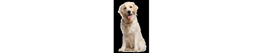 Produkty i akcesoria, wszystko dla psów tanio - sklep internetowy